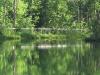 Woodstream lakeside